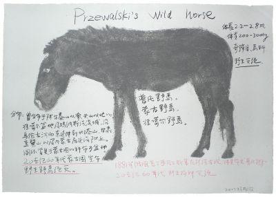 蒙古野马(系列:动物)