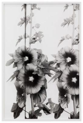 LISA OPPENHEIM - THE AMERICAN COLONY (solo) @ARTLINKART, exhibition poster
