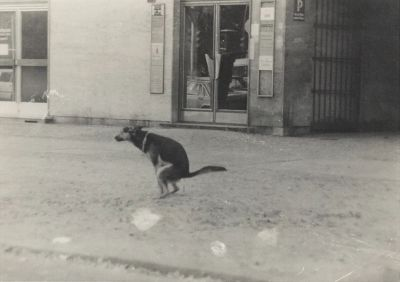 """ZEITREISE"" – PHOTOGRAPHS 1966 – 1986. COLLECTION GEORG POLKE (solo) @ARTLINKART, exhibition poster"